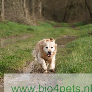 Biologisch Hondenvoer & Snacks