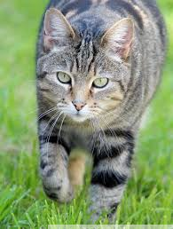 Biologisch Kattenvoer & Snacks