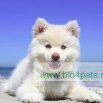 hond-vakantie-strand