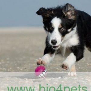 Duurzame artikelen:speelgoed, bedden en mode artikelen e.d. voor dier en baasje