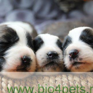 Duurzame Puppy spullen!