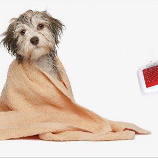 Verzorging en hygiëne