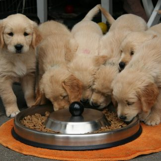 Eten, (trainings)snacks en supplementen voor puppy's